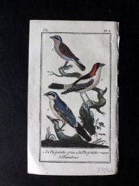 Buffon 1785 Antque Hand Colored Bird Print. Shrikes 2-5